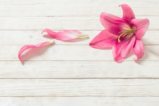 Różowa leluja kwitnie na białym drewnie