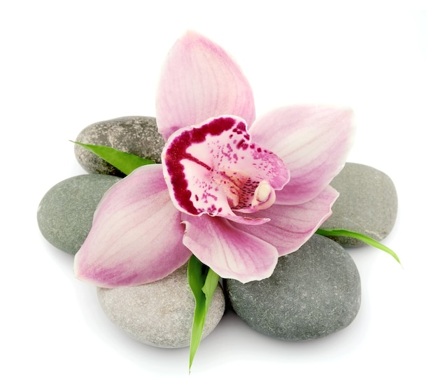 Różowa orchidea na kamieniach na białym tle