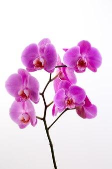 Różowa piękna orchidea na białej powierzchni.