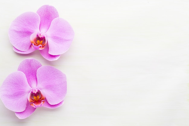 Różowa piękna orchidea na białym tle.