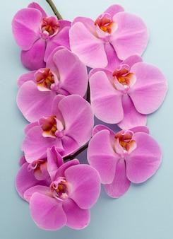 Różowa piękna orchidea na kolorowej powierzchni.
