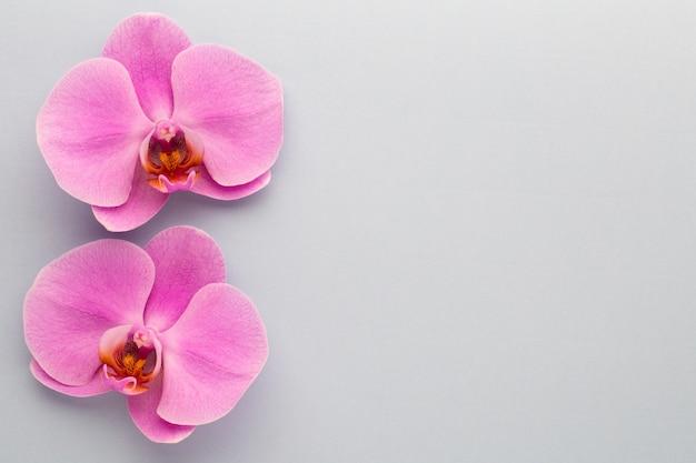 Różowa piękna orchidea na kolorowym stole