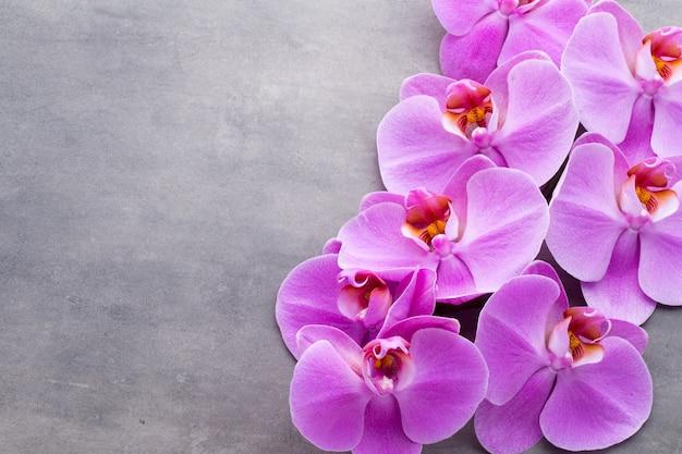 Różowa piękna orchidea na kolorowym tle.