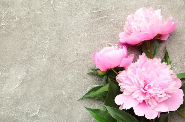 Różowa piwonia kwitnie na popielatym betonie.