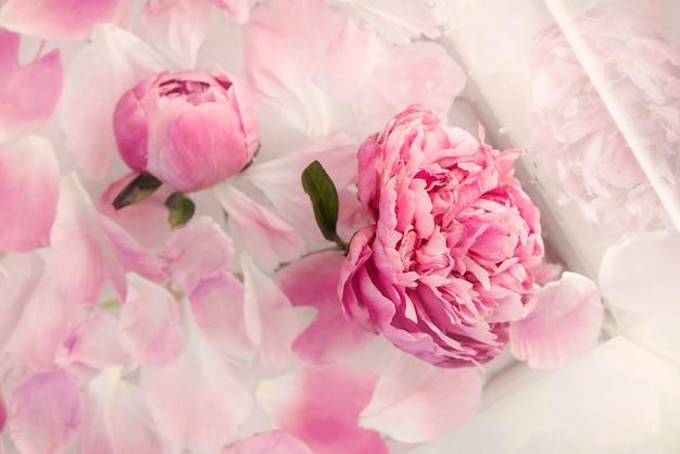 Różowa piwonia w mlecznej wodzie. płatki kwiatów w kąpieli z mlekiem