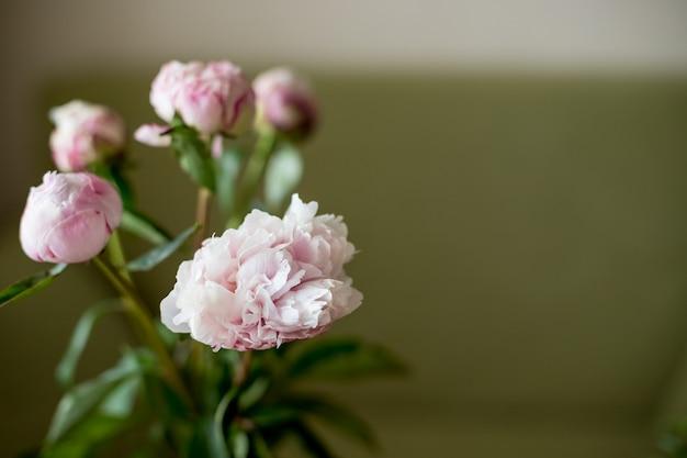 Różowa piwonia w wazonie, stonowany obraz. świeża wiązka różowe peonie na lekkim tle.