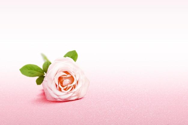 Różowa róża na różowym tle