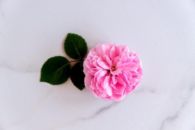 Różowa róża przy stole z białego marmuru. przestrzeń kopii widoku z góry. kwiat tło.