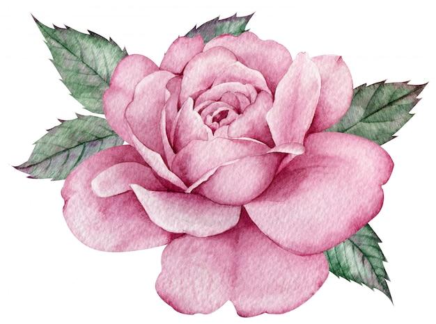 Różowa róża z zielonymi liśćmi. kolorowa kompozycja kwiatowa akwarela. ręcznie rysowane ilustracji.