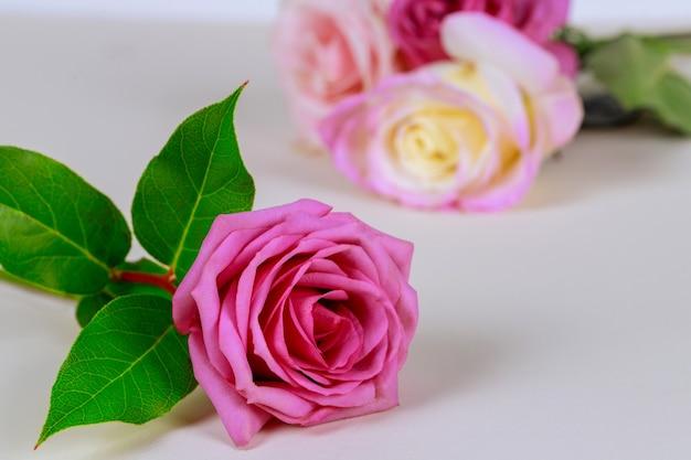 Różowa róża z zielonymi liśćmi na białym tle.