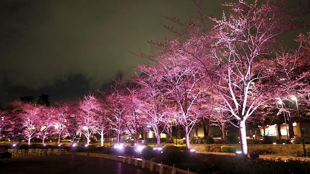 Różowa sakura lub kwiat wiśni nocą w roppongi tokyo midtown