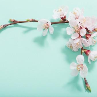 Różowa wiśnia kwitnie na zielonym tle