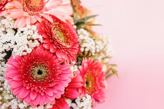 Różowa żywa gerbera, biały łyszczec piękny bukiet na różowym tle.