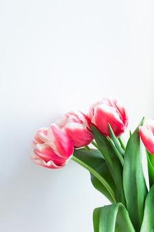 Różowe białe tulipany na jasnoszarej ścianie. delikatny bukiet kwiatów z bliska przestrzeń kopii, bez ludzi. wiosna kwitnąca pionowo