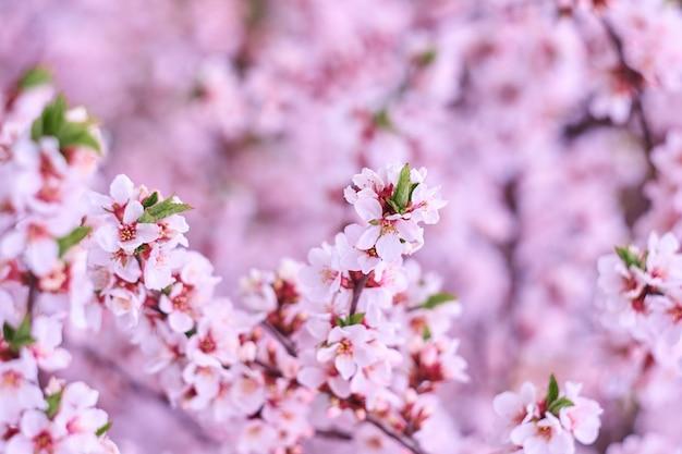 Różowe drzewo kwiat na tle przyrody
