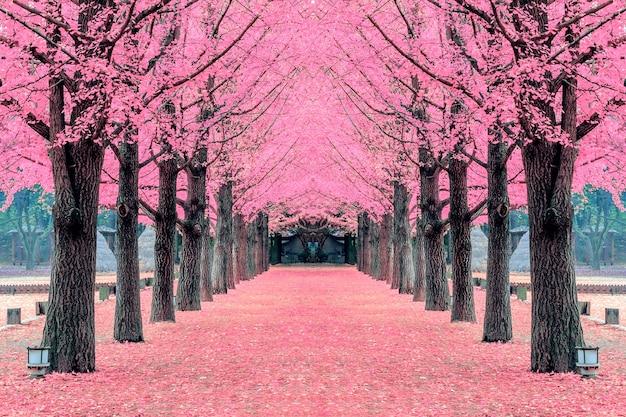Różowe drzewo, wyspa nami w korei