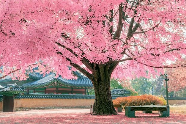 Różowe drzewo.