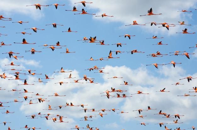 Różowe flamingi latające nad laguną.