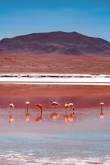 Różowe flamingi w ekscytującej lagunie