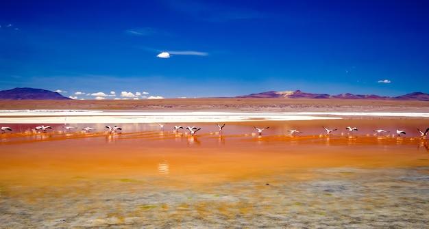 Różowe flamingi w ekscytującej scenerii laguny w boliwii