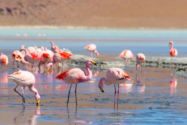 Różowe flamingi