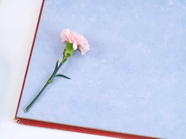 Różowe goździki na niebieski notatnik