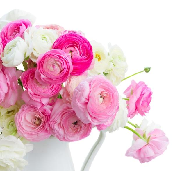 Różowe i białe jaskier świeże kwiaty kwitnące w wazonie na białym tle
