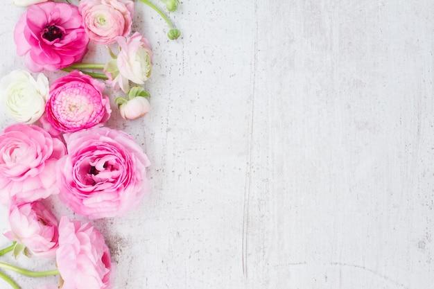Różowe i białe jaskier świeże kwiaty na starzejącym się białym drewnianym pulpicie