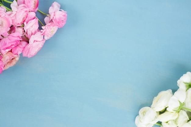 Różowe i białe kwiaty jaskier na niebieskim tle drewnianych
