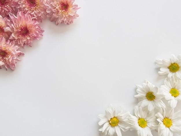 Różowe i białe kwiaty, nazywane są chryzantemą, dwoma rogami kadru