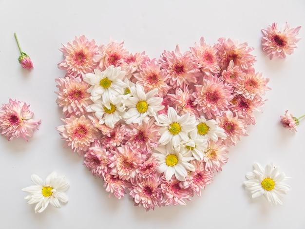 Różowe i białe kwiaty, nazywane są chryzantemą, ułożone w kształcie serca