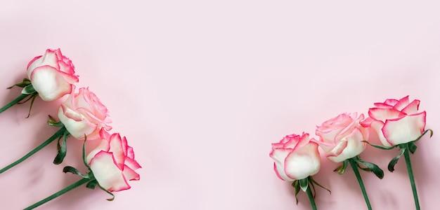 Różowe i białe pąki róży na białym tle na jasnoróżowym tle