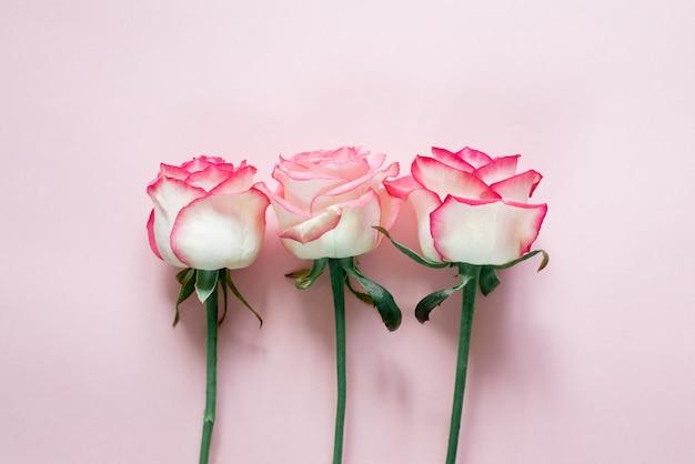 Różowe i białe pąki róży na białym tle
