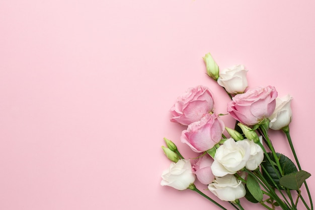 Różowe i białe róże kwitną na różowym tle z copyspace.