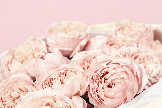 Różowe i brzoskwiniowe kwiaty róż piwonii z bliska