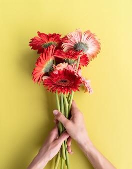 Różowe i czerwone gerbery bukiet stokrotki na zielonym tle. minimalna konstrukcja płaska. kobiece ręce trzymające kwiaty urodzinowe
