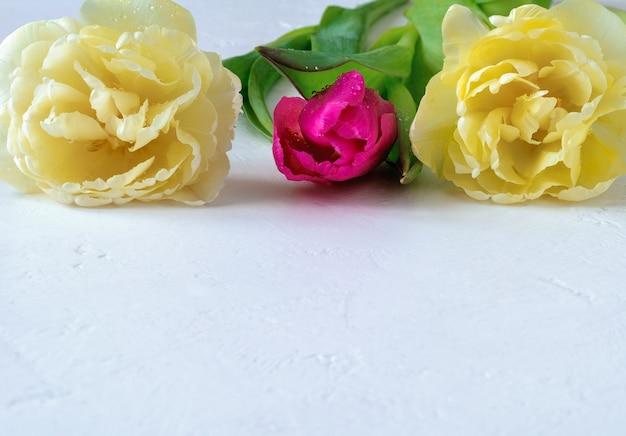 Różowe i dwa jasnożółte tulipany frotte z kroplami wody na jasnym tle z miejsca na kopię