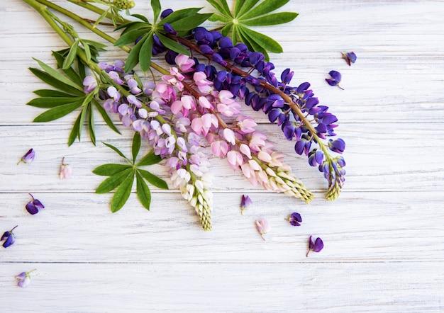 Różowe i fioletowe kwiaty łubinu