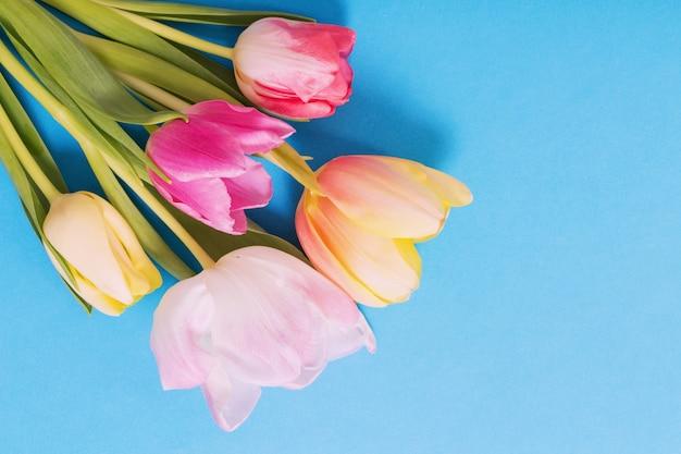 Różowe i żółte tulipany na niebieskim papierze