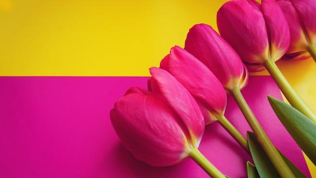 Różowe kolorowe tulipany na kolorowym tle, w płaskiej kompozycji świeckiej z miejscem na kopię