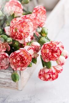 Różowe kwiaty goździka
