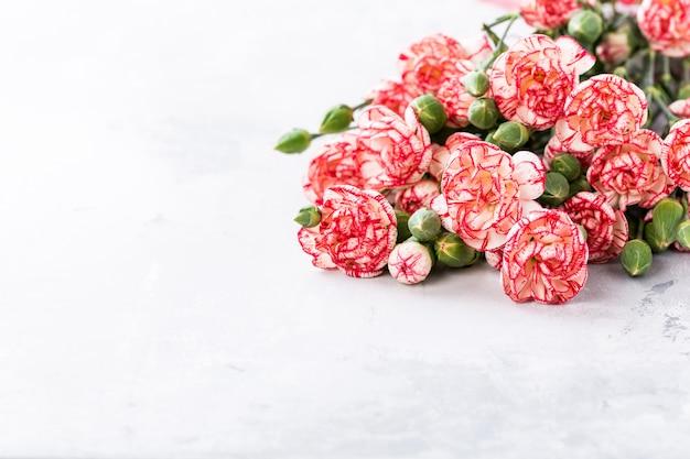 Różowe kwiaty goździków