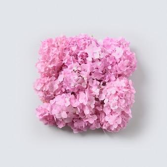 Różowe kwiaty hortensji jako kwadratowa kompozycja na szarym tle. kreatywne karty z pozdrowieniami. widok z góry.