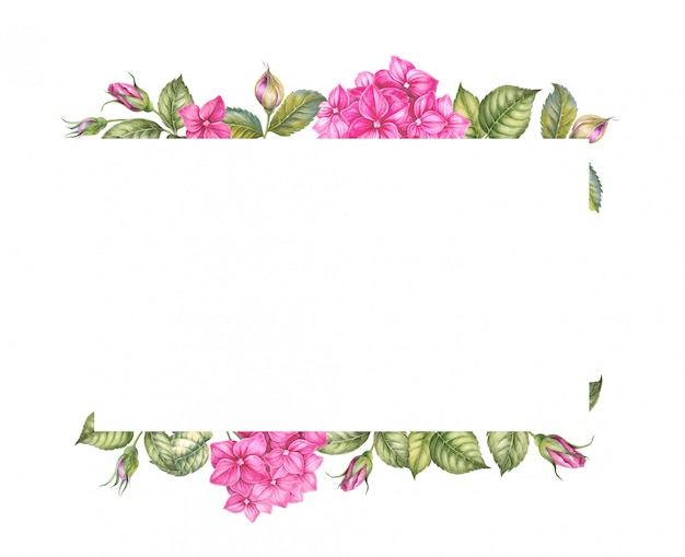 Różowe kwiaty hortensji.
