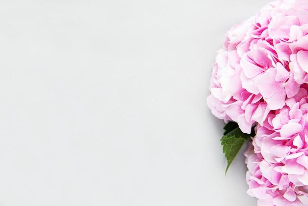 Różowe kwiaty hortensji