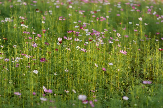 Różowe kwiaty i niewyraźna zieleń