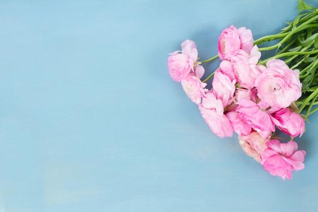 Różowe kwiaty jaskier na niebieskim tle drewnianych