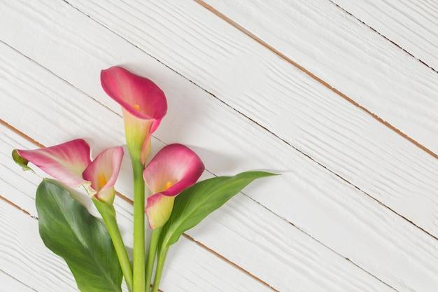 Różowe kwiaty lilii calla na białej powierzchni drewnianych