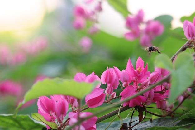 Różowe kwiaty na drzewie z owadem w przyrodzie piękne tło