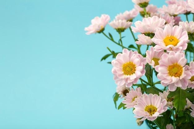 Różowe kwiaty na minimalistycznym kolorowym tle. koncepcja tle kwiatów